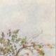 DÉTAILS 03   Les citronniers au printemps - Sicile (Italie)