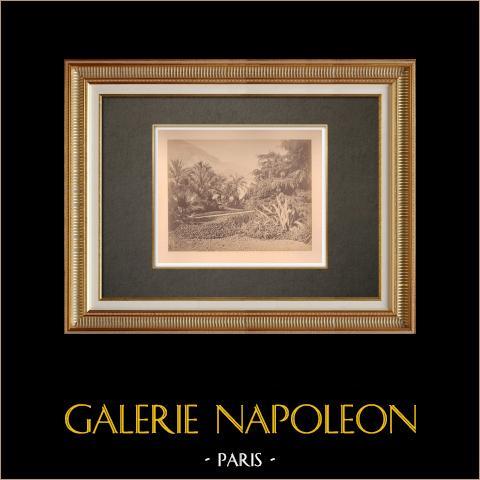 Principado de Mónaco - Monte Carlo - Los Jardines - Costa Azul | Impresión fotográfica en papel a la albúmina. Anónimo. Montado sobre cartón. 1880