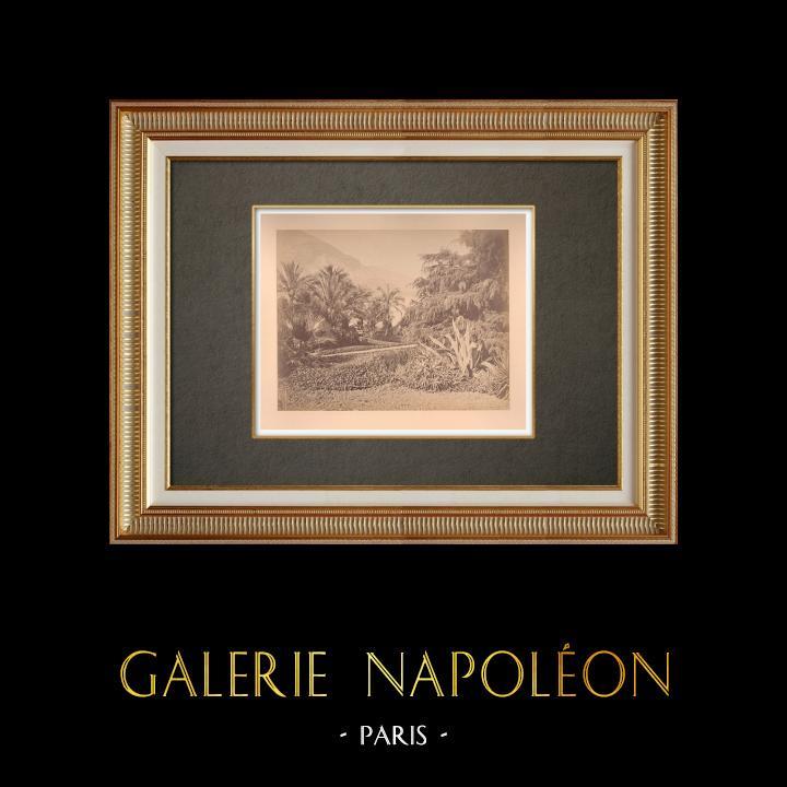 Antique Prints & Drawings | Principality of Monaco - Monte Carlo - The Gardens - Côte d'Azur | Photography | 1880