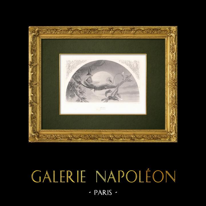 Gravures Anciennes & Dessins | Ariel - La Tempête (William Shakespeare) | Taille-douce | 1875