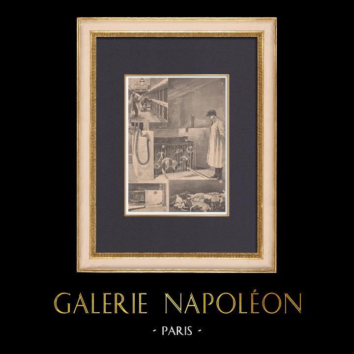 Gravures Anciennes & Dessins | Asphyxie des chiens à la fourrière de Paris - 1902 | Gravure sur bois | 1902