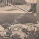 DÉTAILS 06 | Asphyxie des chiens à la fourrière de Paris - 1902