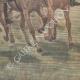 DÉTAILS 06 | Revue militaire par Paul Doumer et l'Empereur de l'Annam - Hanoï - Indochine - 1902