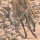 DÉTAILS 02 | Accident de cheval de Lord Kitchener - Shimla - Indes Anglaises - 1903