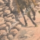 DÉTAILS 05 | Accident de cheval de Lord Kitchener - Shimla - Indes Anglaises - 1903