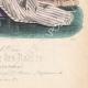 DETALLES 06 | Grabado de Moda - París - Mme Mallard - Parfumeries de Faguer