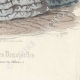 DETAILS 06 | Fashion Plate - Paris - Avril 1860
