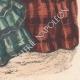 DETAILS 06 | Fashion Plate - Paris - Mai 1855 - Le Conseiller des Dames et des Demoiselles - 159 Rue Montmartre