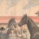 DETAILS 02 | King Edward VII visits the Haras de Jardy - Marnes-la-Coquette - Île-de-France - 1905