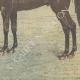 DETAILS 06 | King Edward VII visits the Haras de Jardy - Marnes-la-Coquette - Île-de-France - 1905