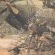 DETAILS 05 | Accident of the french submarine Farfadet - Bizerte - Tunisia - 1905