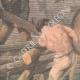 DETAILS 02 | Tribute to Philis de la Charce, historical figure of Dauphiné - 1905