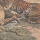 DETAILS 04   A man wounded by a tiger in a hunt in Indochina - 1907