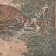 DETAILS 06   A man wounded by a tiger in a hunt in Indochina - 1907