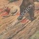DÉTAILS 05 | Un ours laché dans un parc à moutons - France - 1907