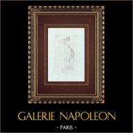 Zegevierende Venus - Vrouwelijk Naakt - Galleria Borghese - Rome