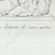 DETTAGLI 04 | Lupa allante di rosso antico - Galleria Borghese - Roma