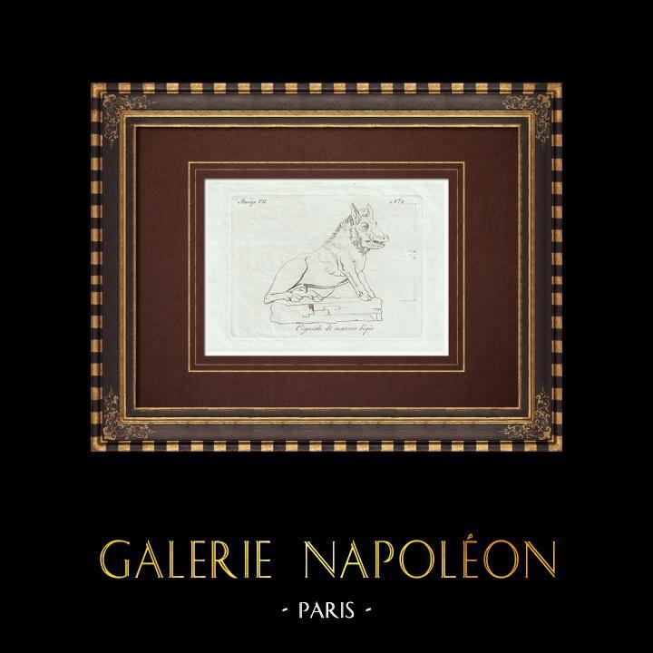 Grabados & Dibujos Antiguos | Jabalí de mármol gris - Galería Borghese - Roma | Grabado calcográfico | 1796