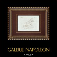 Grå marmorvildsvin - Galleria Borghese - Rom