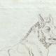 DETTAGLI 02 | Cinghiale del marmo bigio - Galleria Borghese - Roma