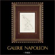 Gladiatore - Eroi combattente - Galleria Borghese - Roma | Incisione originale a bulino su rame su carta vergata. Anonima. 1796