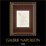 Gladiator - Kämpfender Heroe - Borghese Galerie - Rom