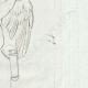 DÉTAILS 04   Cupidon - Nu masculin - Ailes - Carquois - Galerie Borghèse - Rome