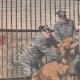 DETTAGLI 01 | Una leonessa salvata da un guardiano - Banditi mascherati attaccano una fattoria - 1908