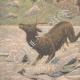 DETTAGLI 05 | Assassinio a Marsiglia - Caccia - Cani e selvaggina affogati a Fontainebleau - 1908