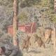 DETTAGLI 02 | Due ciclisti inseguiti da un orso in Corrèze - Francia - 1908