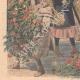 DETTAGLI 05   Fiori dei parchi di Londra dati ai bambini - Inghilterra - 1908
