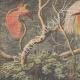 DETTAGLI 01 | Caccia agli Uccelli del Paradiso in Nuova Guinea - 1908