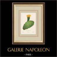 Flowers of Palestine - Prickly Pear