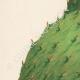 DETTAGLI 02 | Fiori di Palestina - Opuntia Ficus Indica