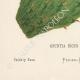 DETTAGLI 05 | Fiori di Palestina - Opuntia Ficus Indica
