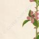 DETTAGLI 02 | Fiori di Palestina - Rubus Sanctus