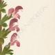 DETTAGLI 04 | Fiori di Palestina - Salvia Indica