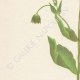 DETAILS 02 | Flowers of Palestine - Palestine Scabious
