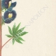 DETAILS 04 | Flowers of Palestine - Blue Lupin