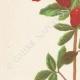 DETAILS 02   Flowers of Palestine - Pomegranate