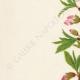 DÉTAILS 02   Fleurs de Palestine - Amandier