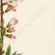 DÉTAILS 05   Fleurs de Palestine - Amandier