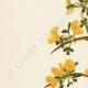 DETAILS 02 | Flowers of Palestine - Prickly Broom