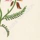 DETAILS 04 | Flowers of Palestine - Milk Vetch