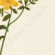 DETALLES 05 | Flores de Palestina - Linum Flavum