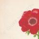 DETAILS 01 | Flowers of Palestine - Scarlet Anemone