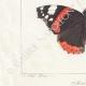 DETAILS 03   Butterflies of Europe - Morio - Paon de Jour - Vulcain