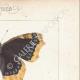 DETAILS 04   Butterflies of Europe - Morio - Paon de Jour - Vulcain
