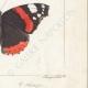 DETAILS 06   Butterflies of Europe - Morio - Paon de Jour - Vulcain