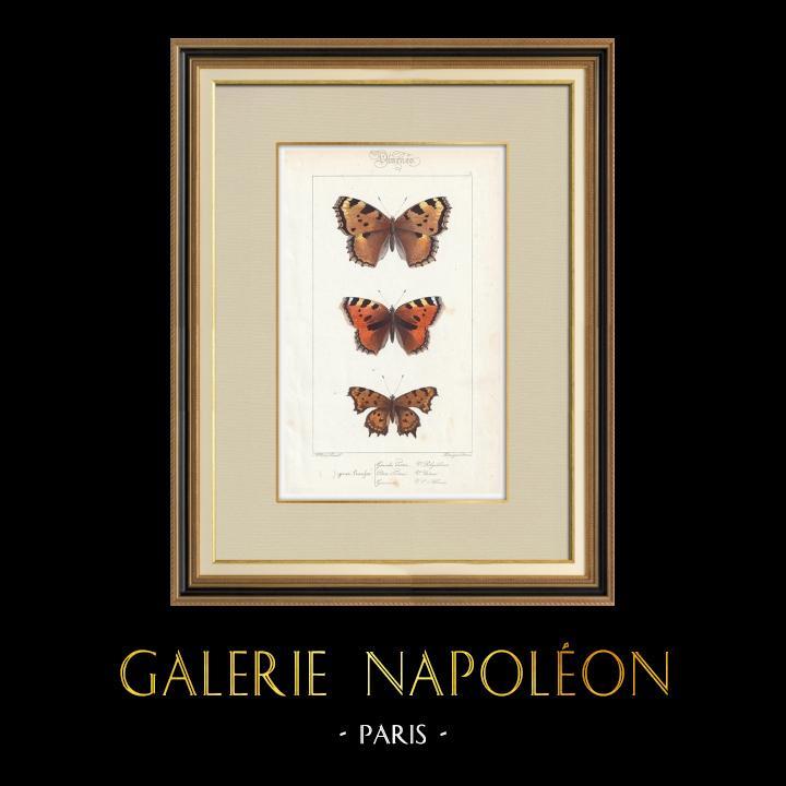 Stampe Antiche & Disegni   Farfalle dall'Europa - Grande Tortue - Petite Tortue - Gamma   Stampa calcografica   1834